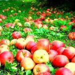 END: акция «Яблочный год»